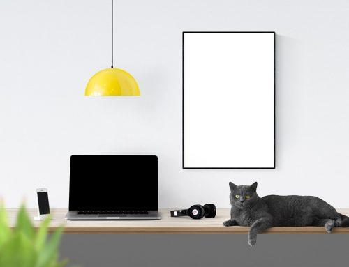 Huisdieren op het werk / kantoor