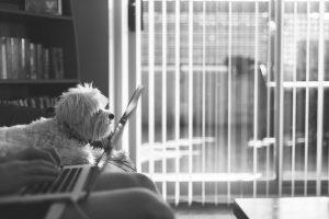 huisdieren op het werk